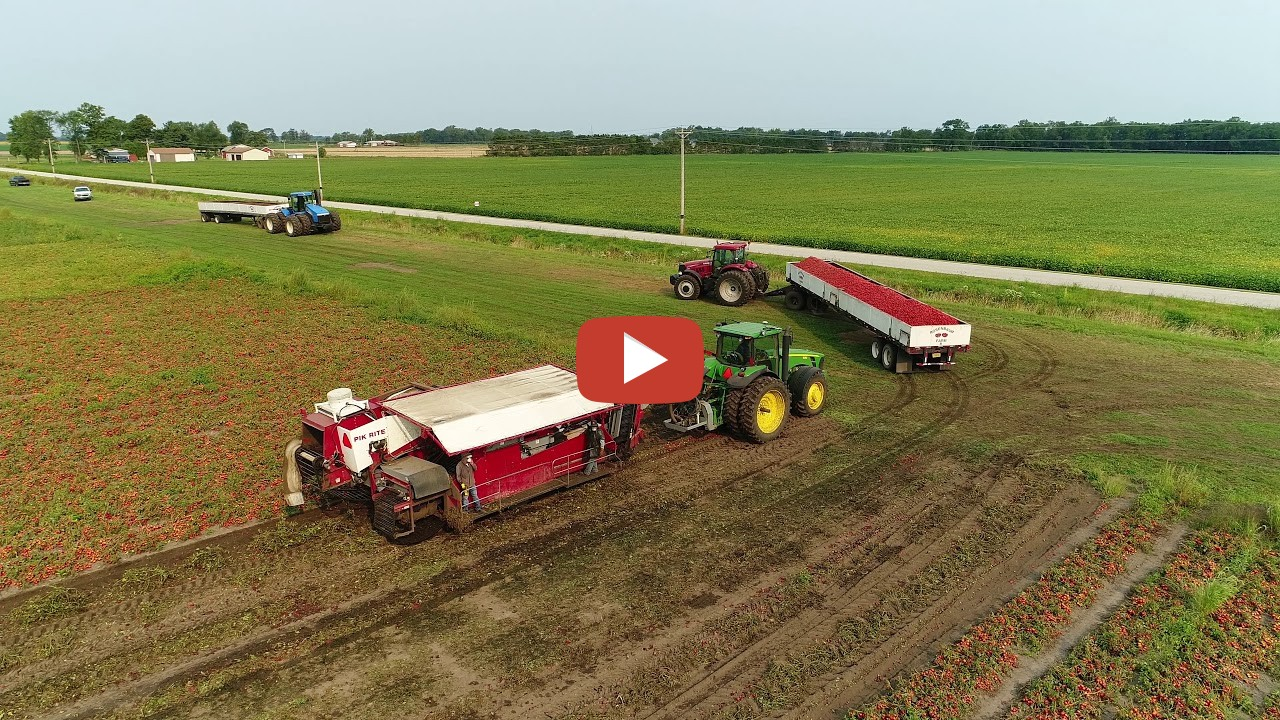 Werner Farms Tomato Harvest